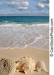 Caribbean sea tropical turquoise beach with sea shells on sand