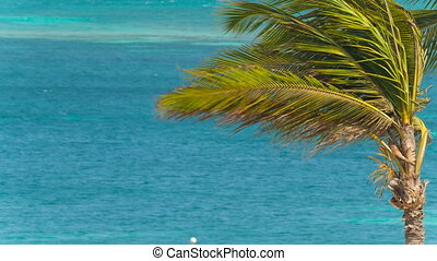 Caribbean sea view background
