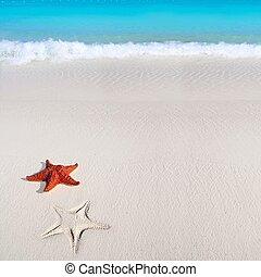 caribbean starfish tropical sand turquoise beach - beautiful...