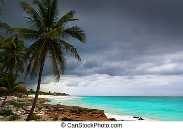 Caribbean stormy day palm trees in Tulum Mexico Quintana Roo