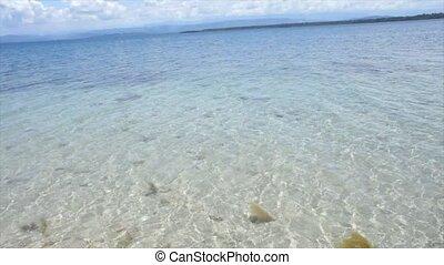 caribbean summer - caribbean coast
