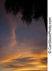 Caribbean Sunset - Caribbean palm at sunset