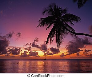 Palm Tree silouetted agains a sunset with a boat in the bay, Pigeon Point, Tobago, Trinidad & Tobago, Caribbean, West Indies