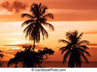 Caribbean sunset, Tobago.