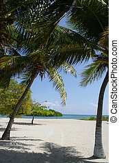 Caribbean White Sand Beach