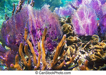 caribbena, 珊瑚礁, mayan 里維埃拉, 鮮艷
