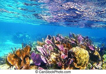 caribbena, coloridos, riviera, coral, mayan, recife