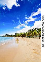 caribe, dominicano, tropical, palma, paraíso, playa