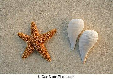 caribe, estrellas de mar, conchas, mar de la arena, playa