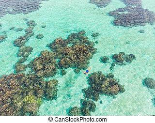 caribe, indonesia, viaje, azul, abajo, gente, arrecife, ...
