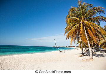 caribe, isla, paraíso, -, árboles de palma, ahorcadura, encima, un, arenoso, playa blanca, con, maravilloso, turquesa, aguas, cuba