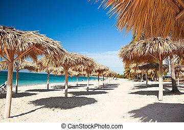 caribe, isla, paraíso, -, árboles de palma, y, playa, con, maravilloso, turquesa, aguas, cuba