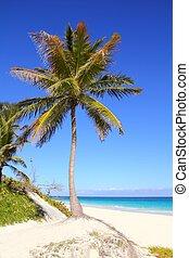 caribe, palma de coco, árboles, en, tuquoise, mar