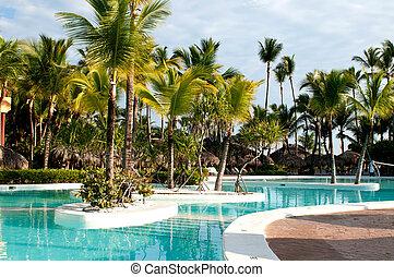 caribe, palma de coco, árboles