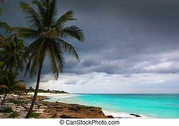 caribe, tempestuoso, día, árboles de palma, en, tulum,...