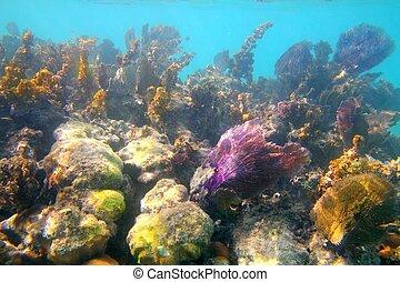 caribe, tropical, arrecife, en, riviera maya