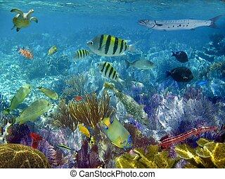 caribe, tropical, submarino, peces, arrecife