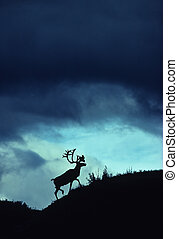 Caribou Silhouette - silhouette of a caribou on a slope