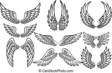 caricatura, alas, conjunto, colección