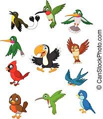 caricatura, aves, colección, conjunto