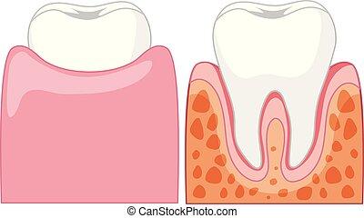caricatura, dentes humanos