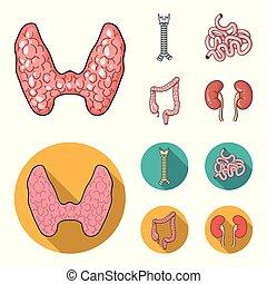 caricatura, glândula, human, estilo, símbolo, espinha, jogo, intestino, vetorial, apartamento, órgãos, pequeno, estoque, web., intestine., grande, ícones, ilustração, cobrança, tiróide