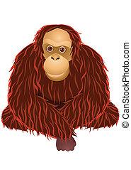 caricatura, orangotango