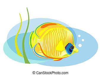 caricatura, pez tropical