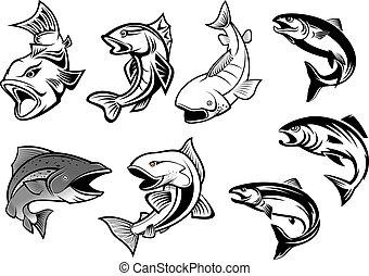 caricatura, salmons, pez, conjunto