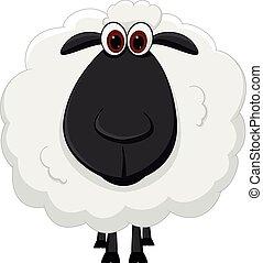 caricatura, sheep