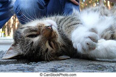 caricia, enjoyd, humano, gato
