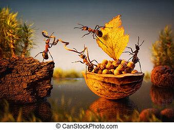 carico, formiche, noci, ormeggiare, lavoro squadra, squadra, corteccia