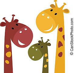 carino, bianco, giraffa, isolato, famiglia