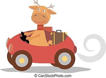 carino, cervo, sciarpa, automobile