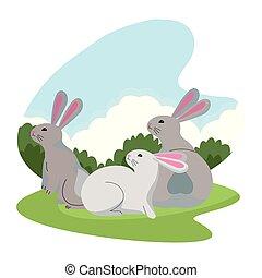 carino, conigli, animali, tre, cartoni animati