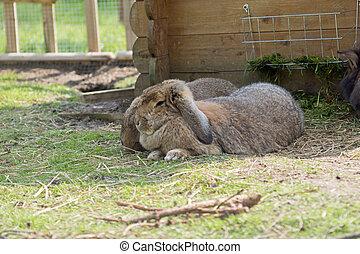 carino, coniglio, coniglietto, giardino