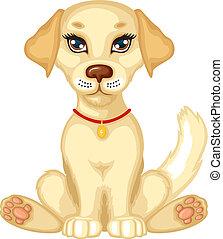 carino, cucciolo, pallido