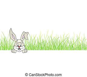 carino, erba, -, coniglio coniglietto