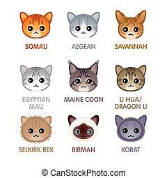 carino, gatto, set, icone, iv
