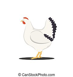 carino, isolato, illustrazione, cartone animato, fondo., vettore, bianco, gallina