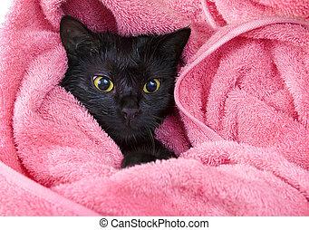 Www. nero bagnato micio