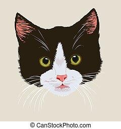 carino, nero, gattino