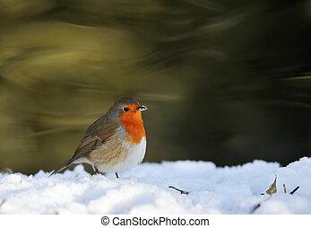 carino, pettirosso, su, neve, in, inverno