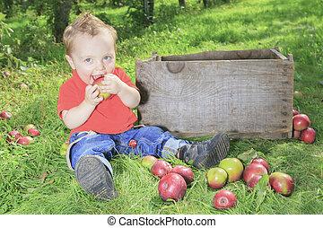 carino, poco, mela, ragazzo, scegliere, giardino