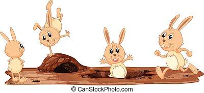 carino, set, coniglio