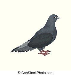 carino, urbano, lato, piccione, grigio, uccello, vettore, fondo, illustrazioni, bianco, standing, vista