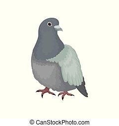 carino, urbano, piccione, grigio, vettore, fondo, illustrazioni, uccello bianco