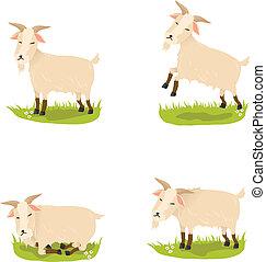 carino, vettore, set, capre