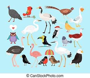 carino, vettore, uccelli