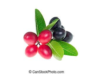 Carissa carandas fruit